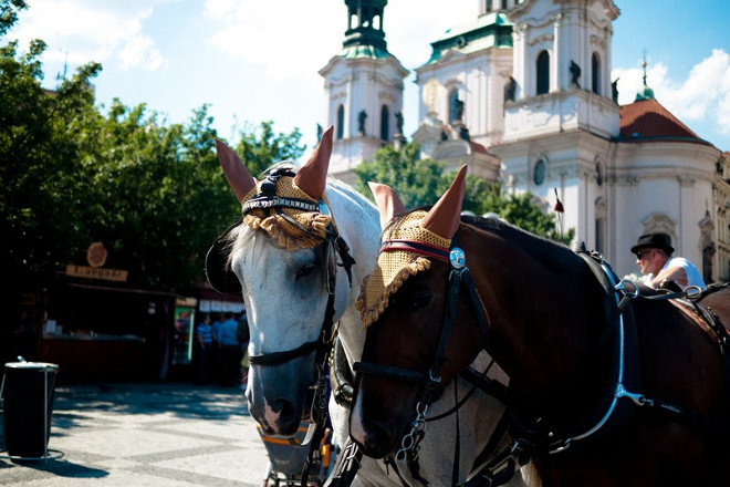 Horses-in-downtown-Prague-private-day-trip-from-Vienna