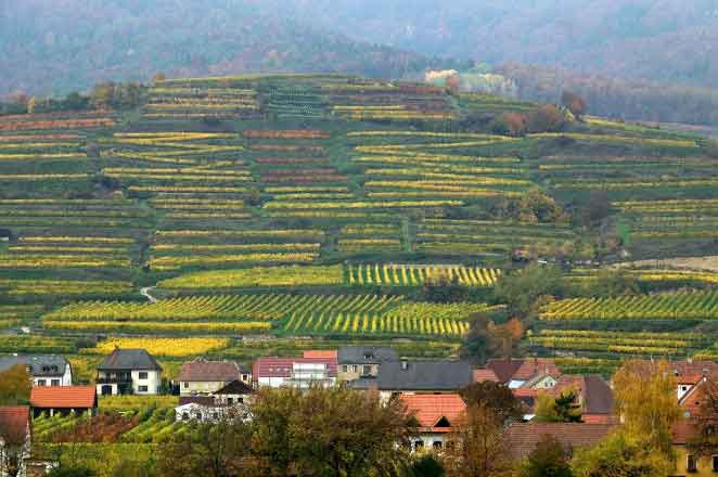 Vineyards-Weissenkirchen-Wachau-Valley-private-tour-from-Vienna